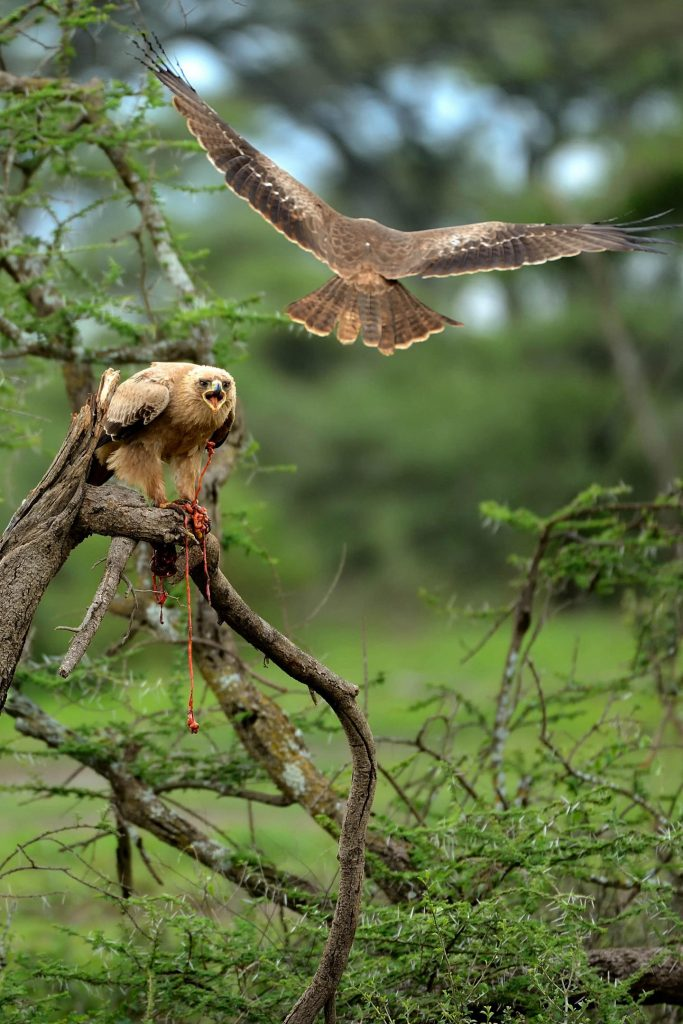 safari_tanzanie_09