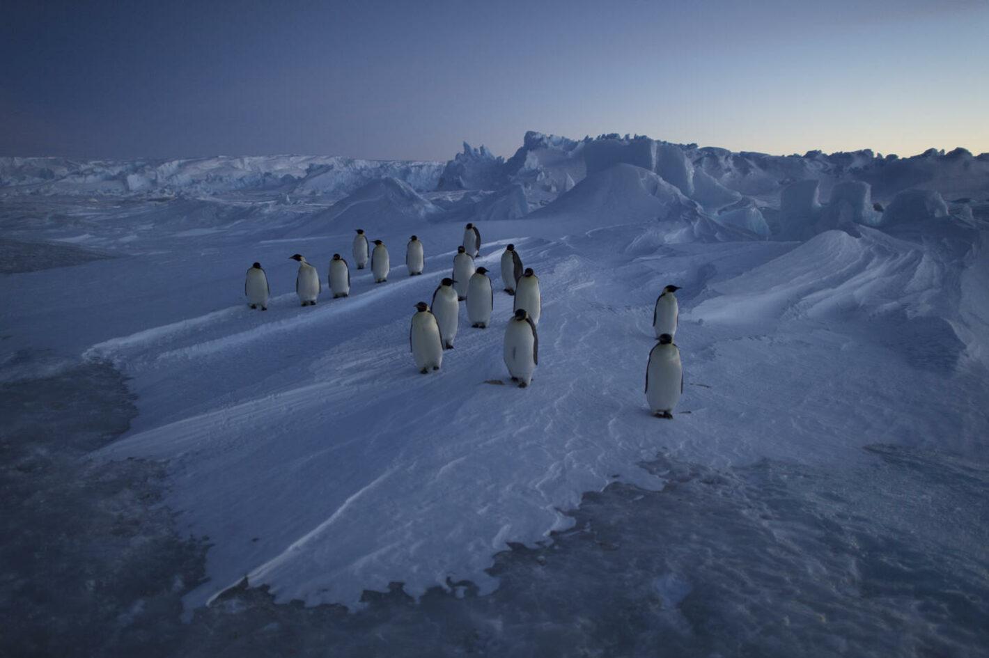 Antarctica extremes vincent munier