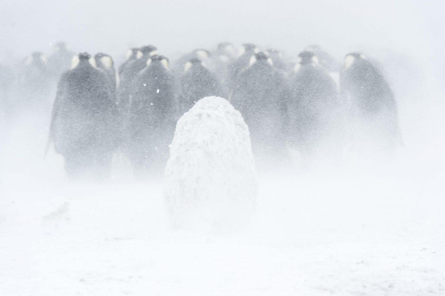 extrêmes antarctica Vincent Munier
