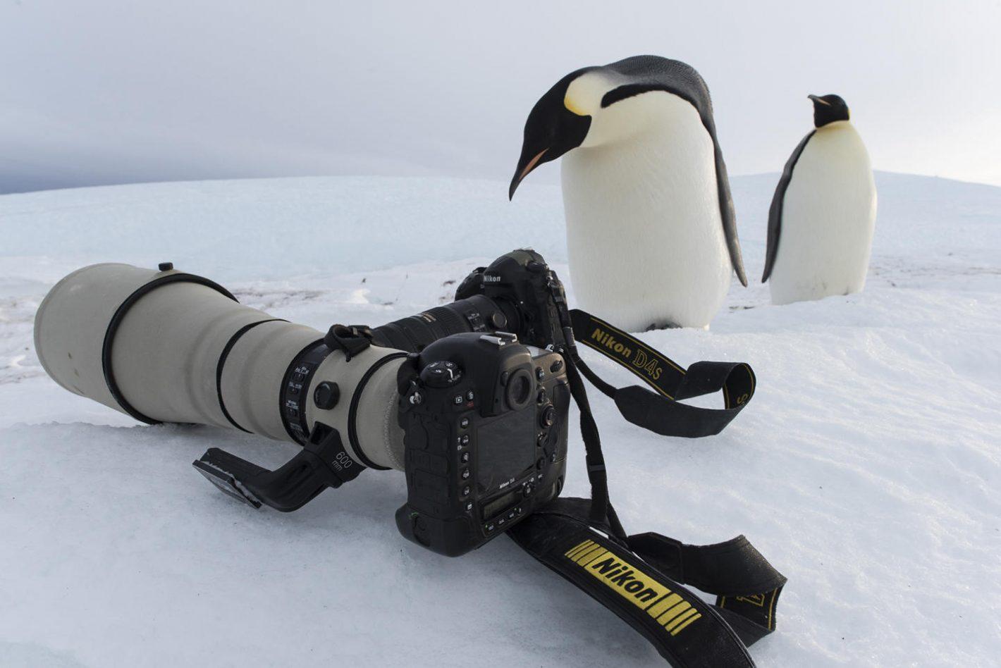 extrêmes Nikon Antarctica Vincent Munier