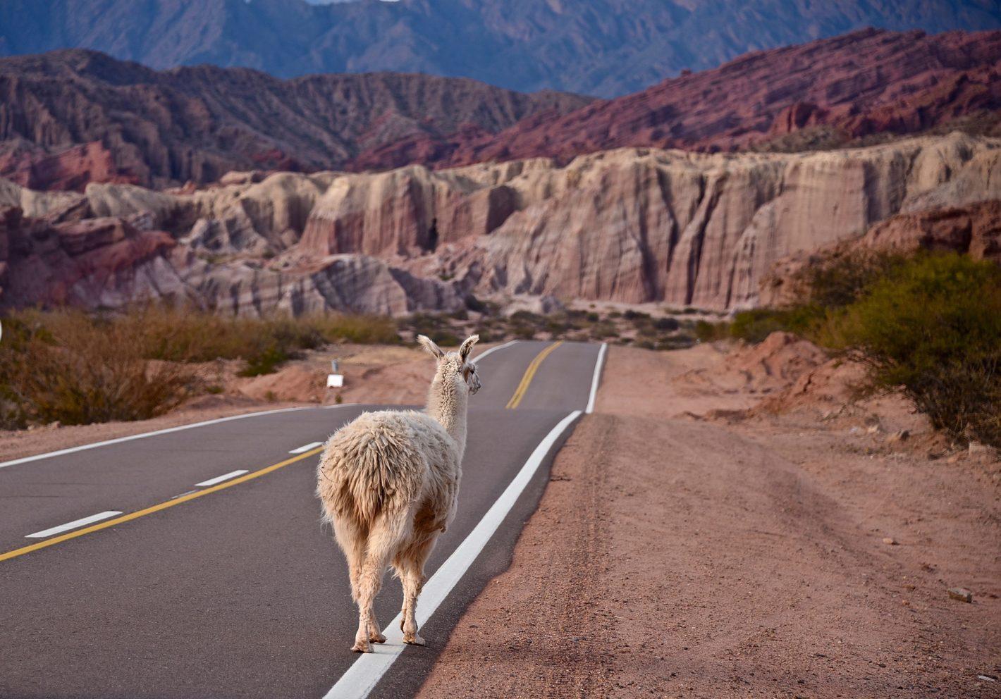 Nikon Voyages Quebrada de las Conchas entre Salta et la frontière Bolivienne. (Argentine)