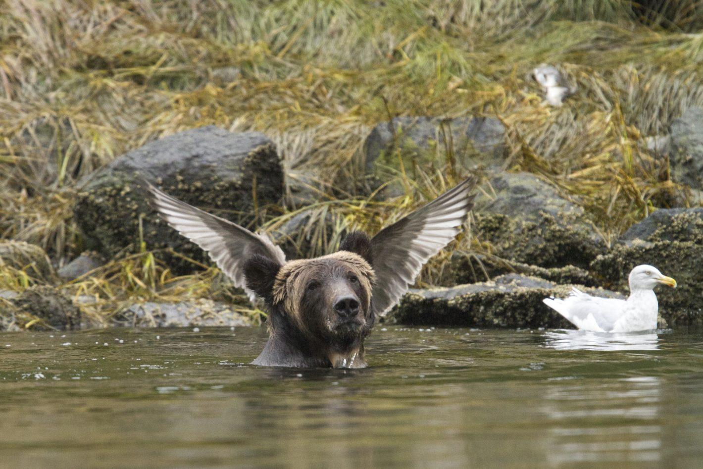 Wildlife Adam Parsons Nikon