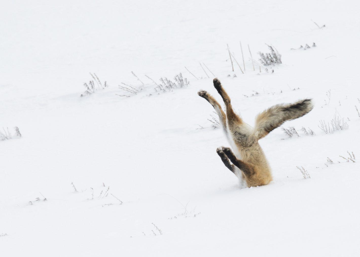 Wildlife Angela Bohlke Nikon