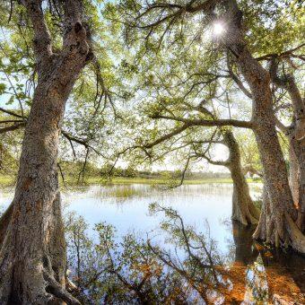 Patrick Galibert AfricaTracks Nikon Botswana