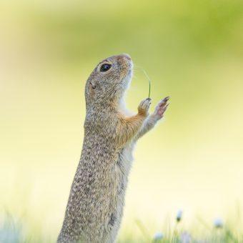 Wildlife Perdita Petzl Nikon