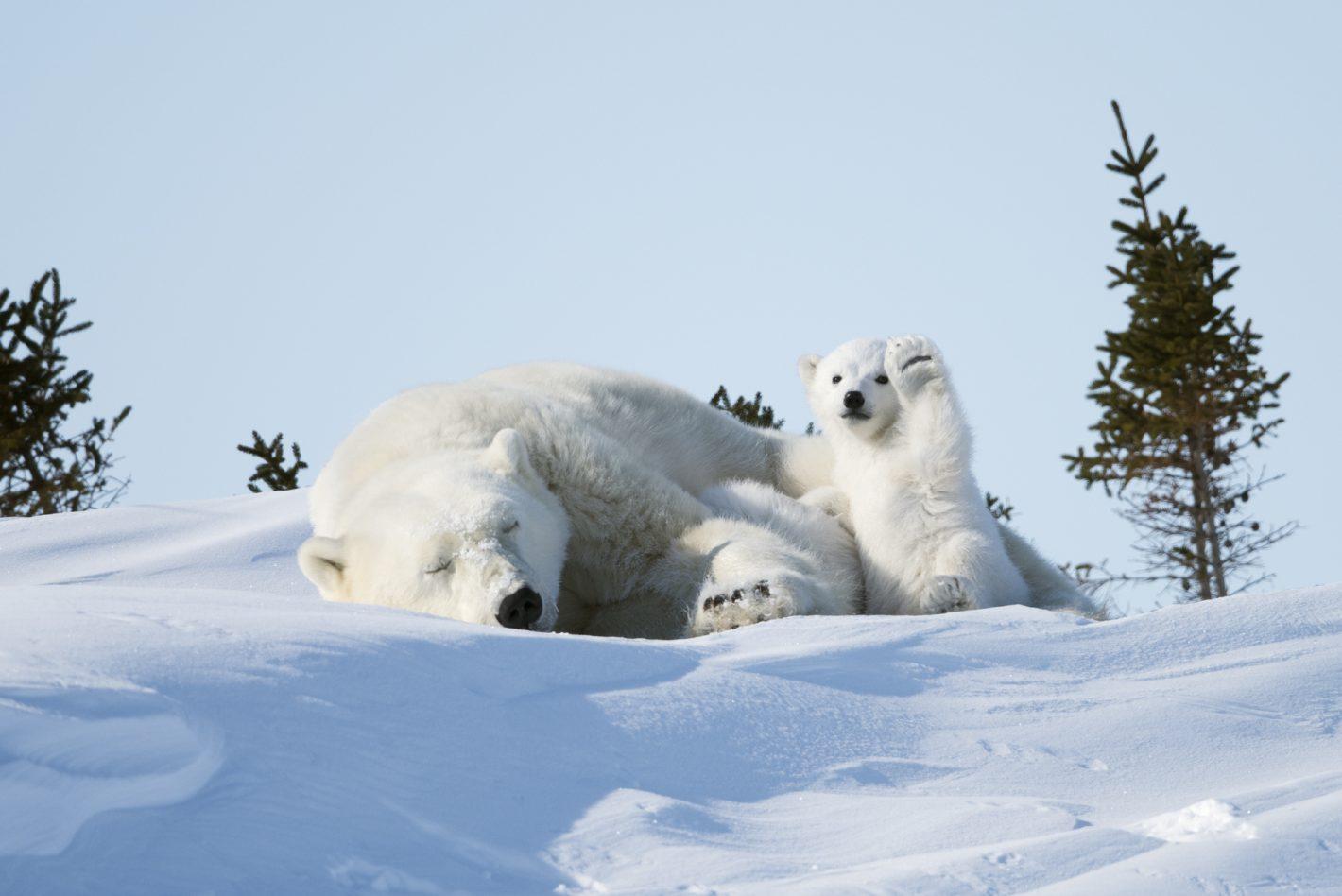 Wildlife Philip Marazzi Nikon