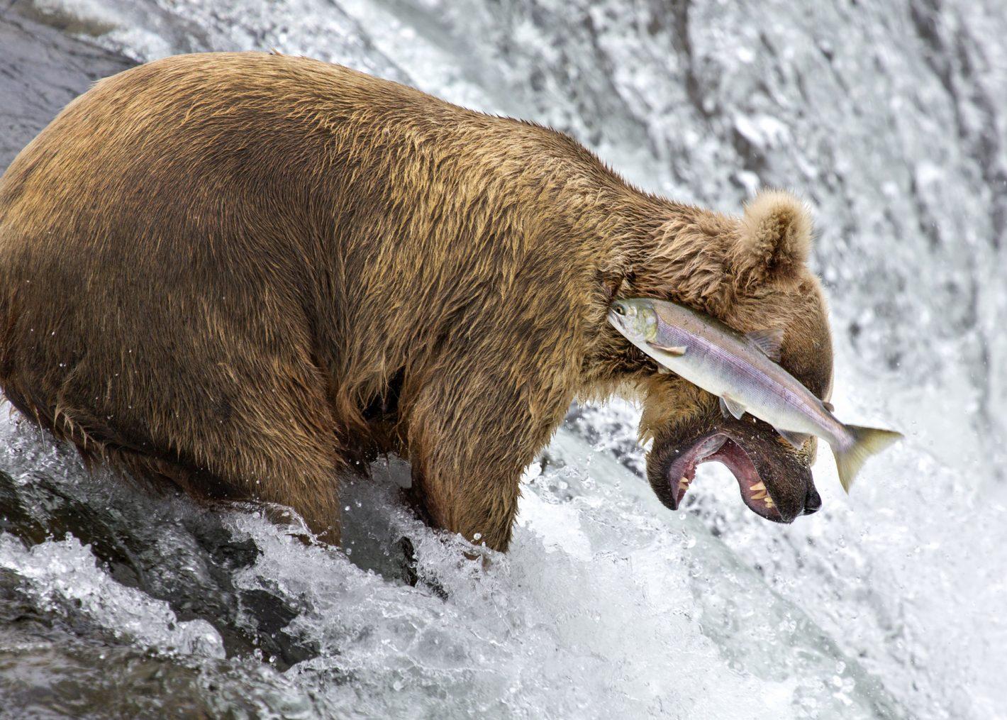 Wildlife Rob Kroenert Nikon
