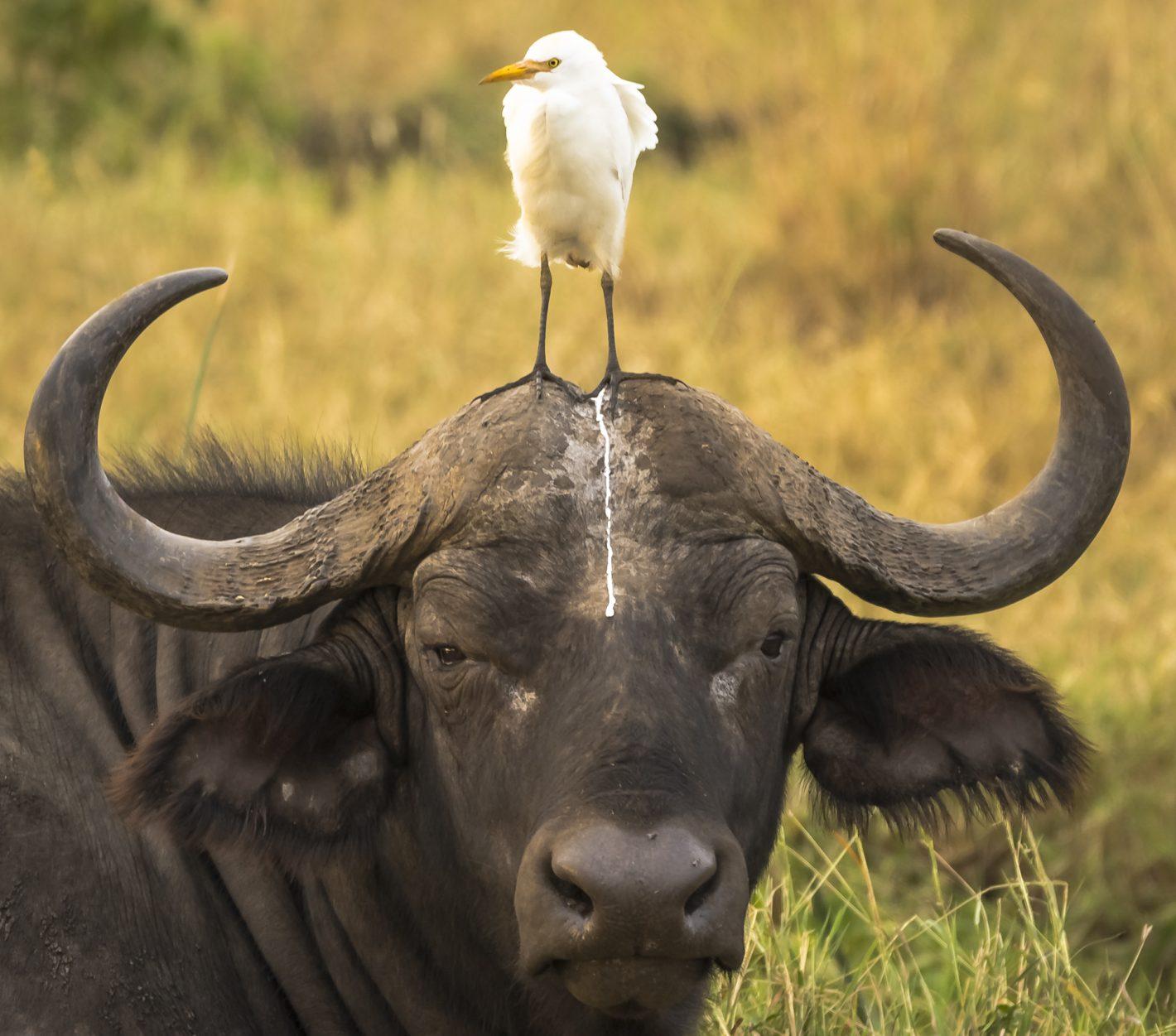 Wildlife Tom Stables Nikon