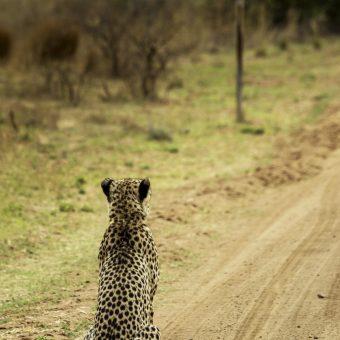 Wildlife Vaughan Jessnitz Nikon