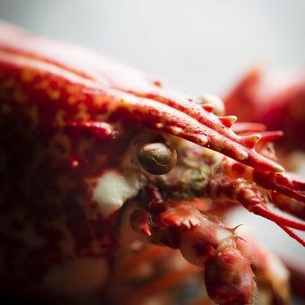 homard, nikon, photographie culinaire
