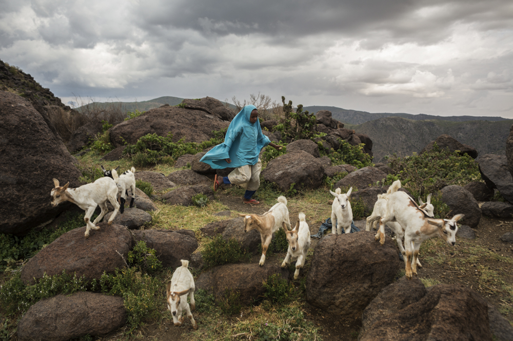 Somaliland, Sheikh Mountains. 06 October, 2013. A goat herdering family in the Sheikh Mountains between Burao and Berbera (names withheld). The family sells their goats to traders who take the animals to Burao Livestock Market where they are purchased for export to Saudi Arabia and other countries in the region.