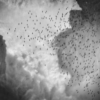 Florence Dabenoc : Prix des oiseaux sauvages de pleine nature. Martinets à tête grise, chutes d'Iguaçu côté argentin.