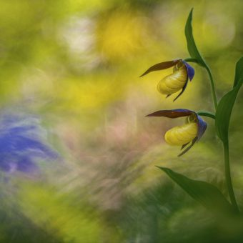 © Marco ZAMO - Prix plantes sauvages de pleine nature - Festival Photo Montier