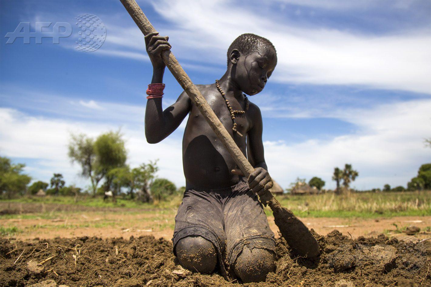 AFP 11 / SOUDAN DU SUD 31 mai 2017 - Panthau, Soudan du Sud - Nyibol Lual, 13 ans, aide à retourner la terre, sa famille possède une petite parcelle sur laquelle elle cultive le sorgho. AFP / ALBERT GONZALEZ FARRAN