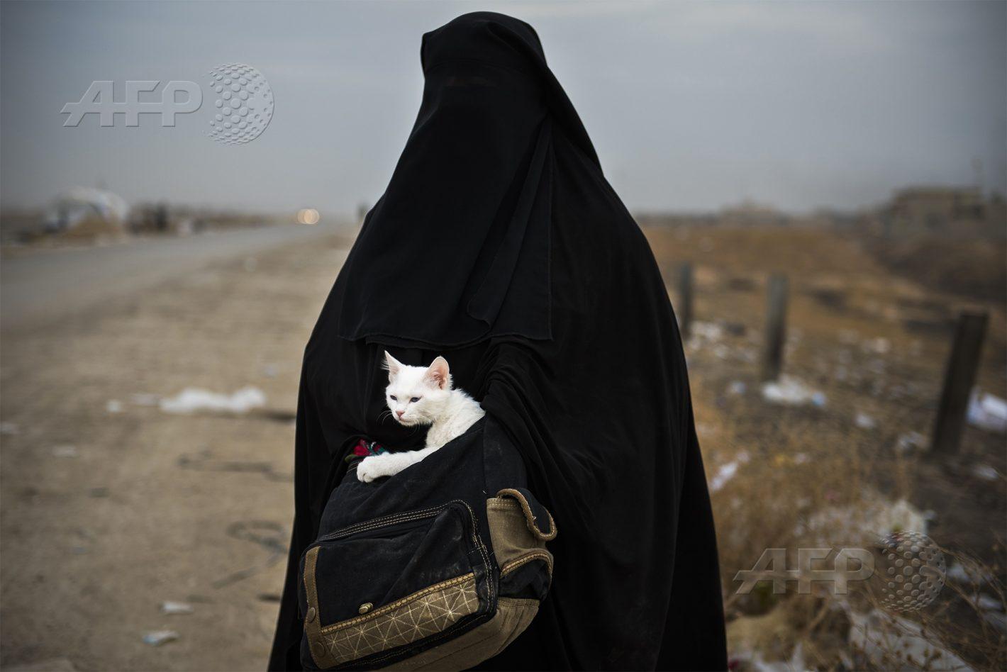 AFP 12 / IRAK 10 novembre 2016 - Shaqouli, Irak - Une Irakienne tient son chat Lulu dans ses bras, alors qu'elle attend une navette à un checkpoint irako-kurde, situé à 35 km à l'est de Mossoul, après avoir fui son domicile avec ses enfants pour rejoindre le camp d'Arbil. AFP / ODD ANDERSEN