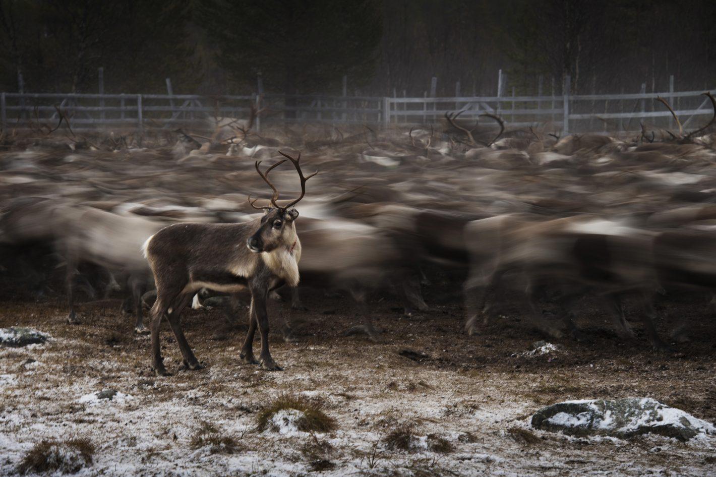 Joel Marklund se penche sur le quotidien du peuple same en Suède