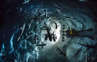 « 700 requins dans la nuit », une exposition et une soirée de rencontre avec Laurent Ballesta au Nikon Plaza