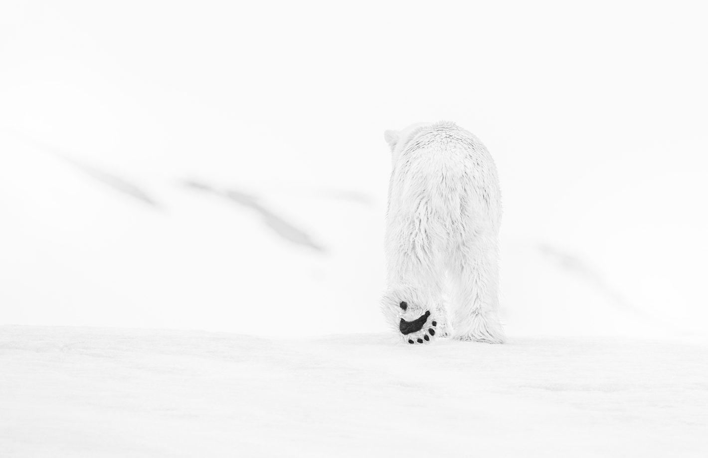 Découvrez David Yarrow, photographe ambassadeur européen de Nikon