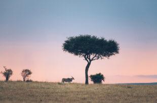 "L'inspiration voyage des Bestjobers ""Safari photo au Kenya"""