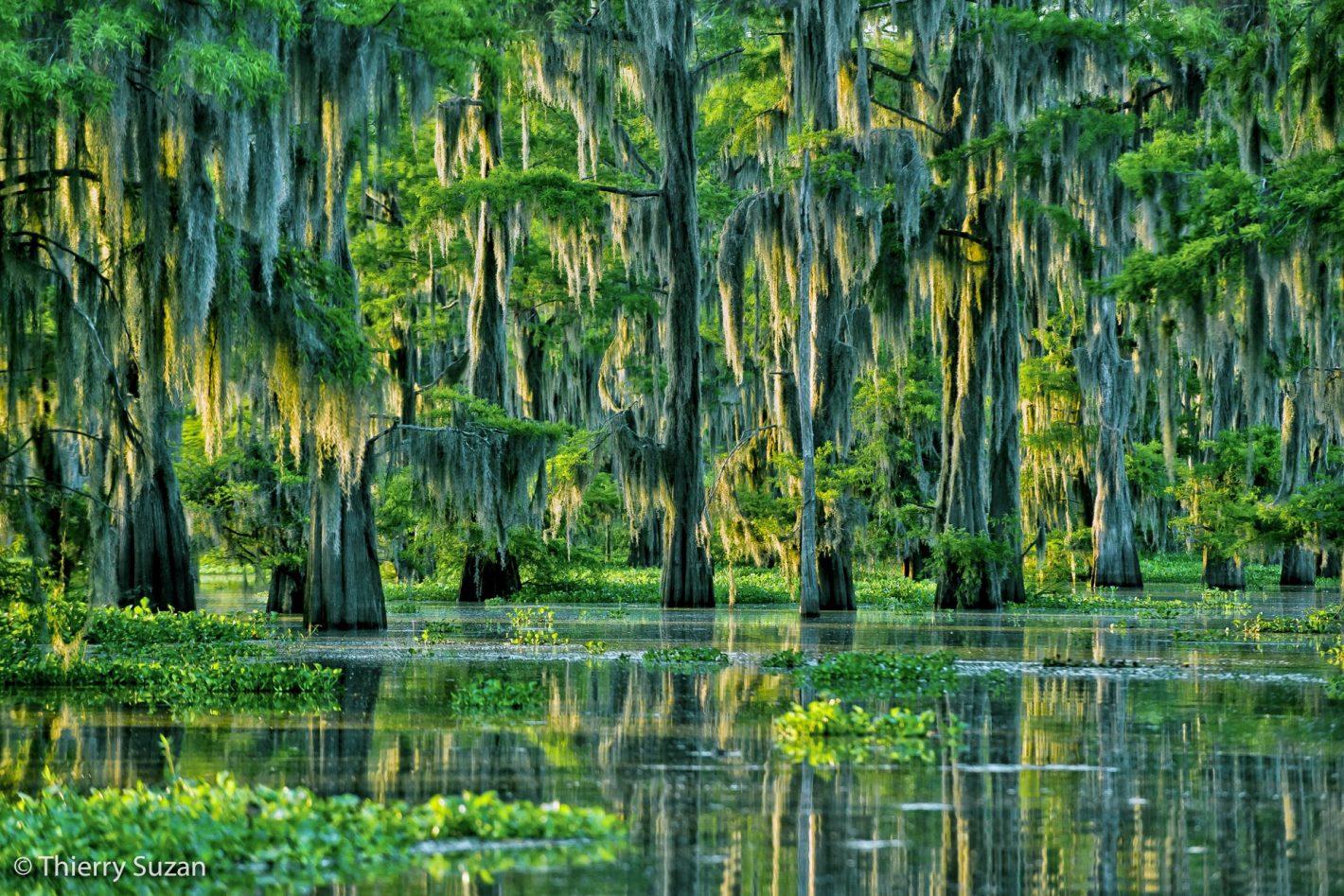 Bayou, Louisiane, Etats-Unis.