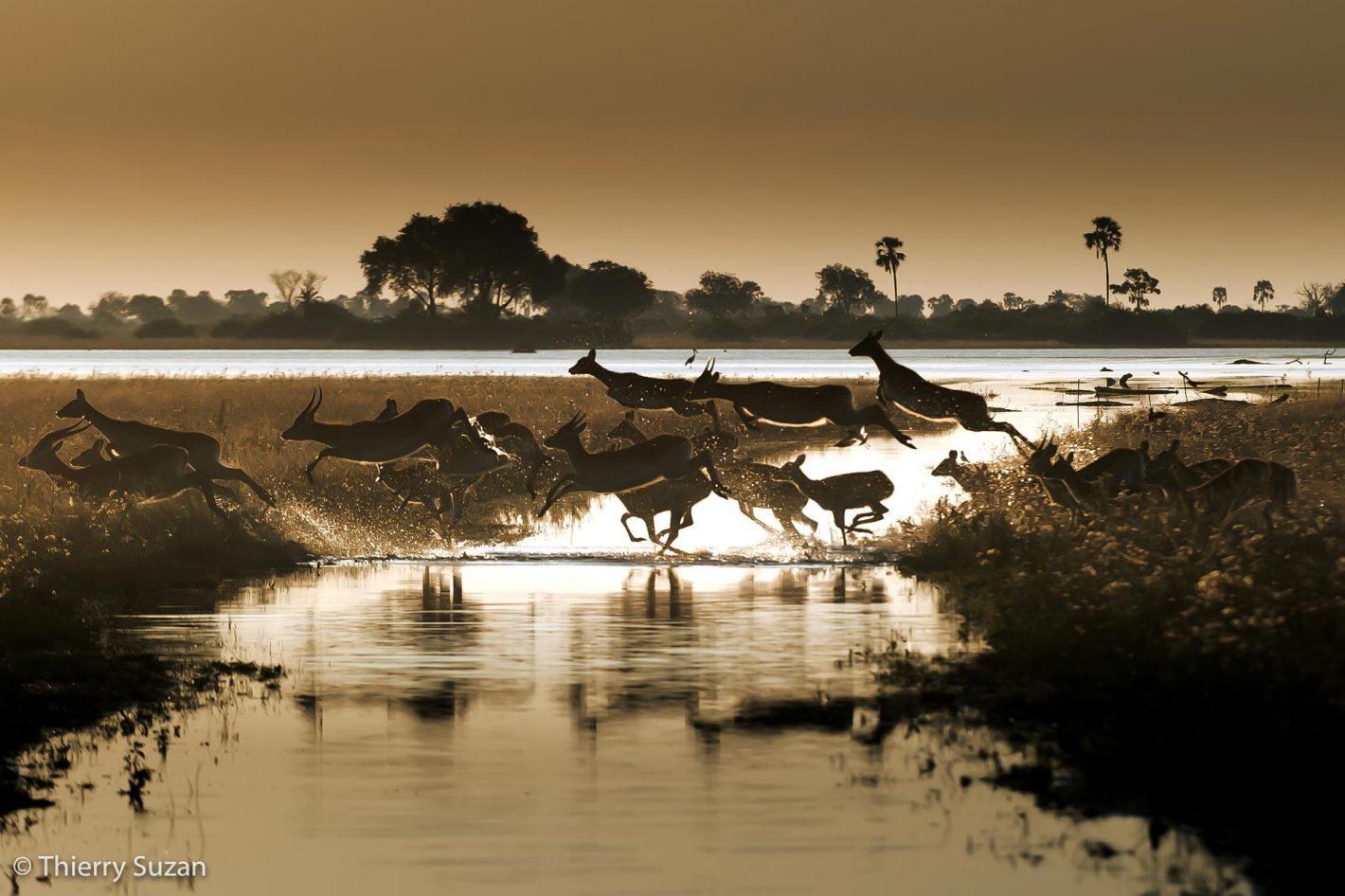 Antilopes, Jao Flats, Botswana.