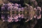 Les paysages roses au Japon à travers l'objectif de Daisuke Uematsu
