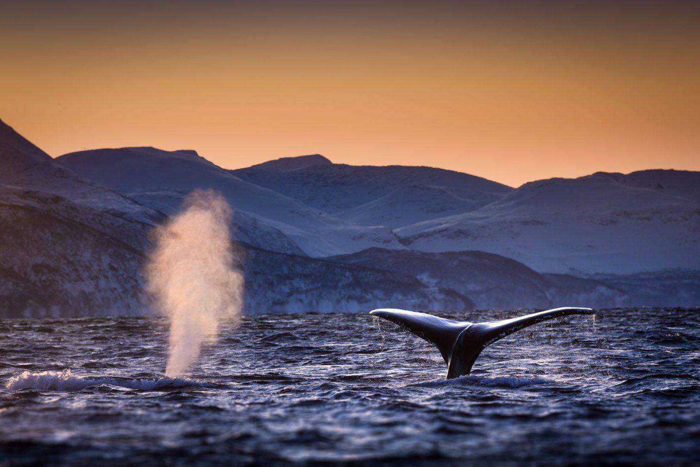 George Karbus voyage à de nouvelles profondeurs pour photographier la plus grande faune de l'océan