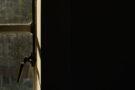 « Poignée de fenêtre » Prise de vue avec éclairage arrière. Dans cette image, la lumière noire crée une silhouette du sujet. Nikon Z 7 et NIKKOR Z 24-70 f / 4 SMode manuel, ISO 400 (Auto), 1 / 160e, f5,6, Auto WB, mesure matricielle, mise au point unique, AF-S. Conseils et crédit d'image: Neil Freeman - Training Manager. Nikon School UK