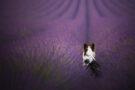 Focus sur la photographie canine avec Audrey Bellot