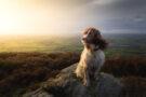 Photographier votre animal : les conseils de Nigel Danson
