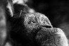 Alfie Bowen, photographe animalier, auteur et activiste
