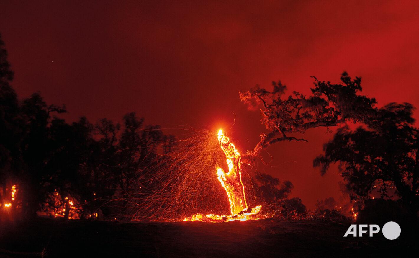 AFP 5 | Josh EDELSON 18 août 2020 - Comté der Napa, Californie (États-Unis)